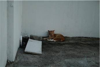 Cat%20Phi%20Phi%204.jpg